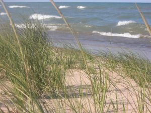 michiganbeachgrass