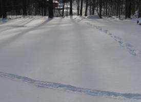 Deerprints1
