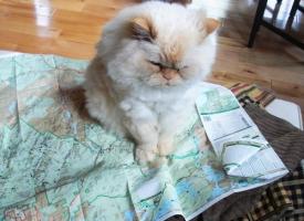 Map Cat
