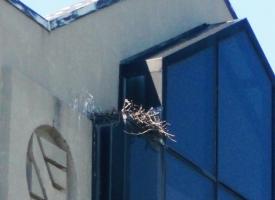Redtail Hawk Nest