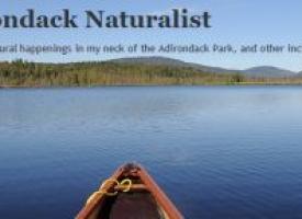 Adk Naturalist