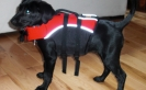 Puppy Flotation Device