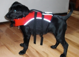 Puppy Flotation Device