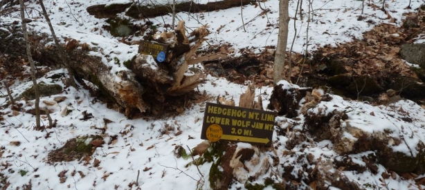 Roostercomb Wolfjaw Sign