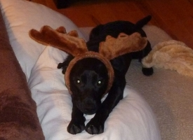 Willa The Reindeer