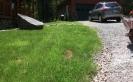 Yard After Drain
